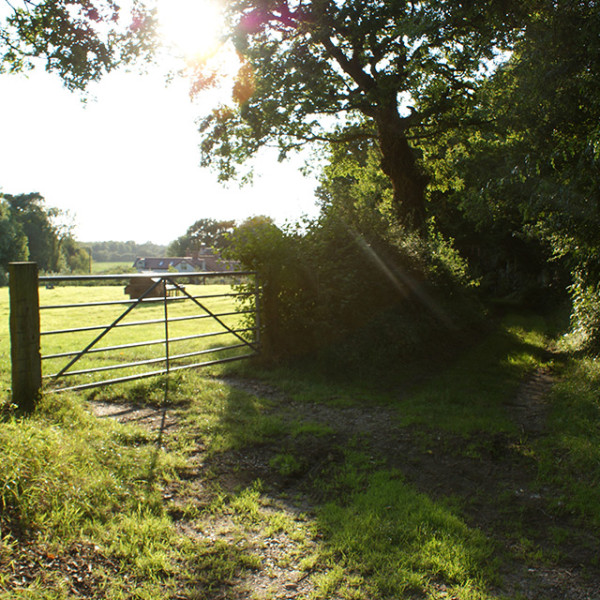 Fields surrounding the Manor.
